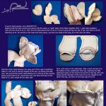 Sewing Plushies Tutorials 107 Best Peluche En Tissus Images On Pinterest Fabric Dolls Doll